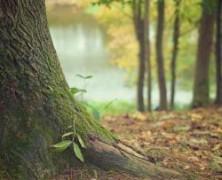 Groupement forestier, investissez et défiscalisez !